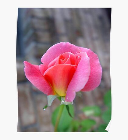 Rosebud and Diamonds Poster