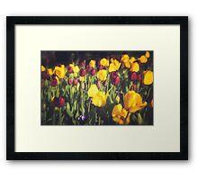 Tulip Dream Framed Print