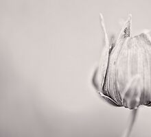 Just a Bulb in the Corner by Katayoonphotos