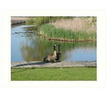 Canada Geese Art Print