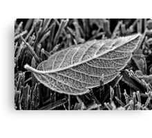 Frost on leaf Canvas Print
