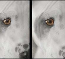 Freckles by Susanne Correa