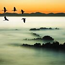 Birds over water by Arek Rainczuk