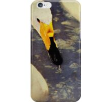 The Swan iPhone Case/Skin