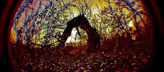 The Trolls Backyard by donnadiehard