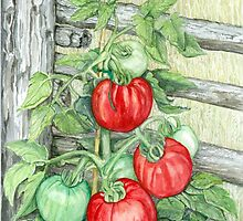 Tomato Plant by clotheslineart