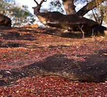 eternal autumn? by Dan A'Vard