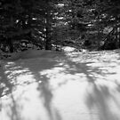 Snowbank 2 by Ellen Cotton