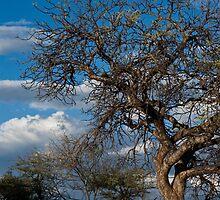 faraway tree by Dan A'Vard