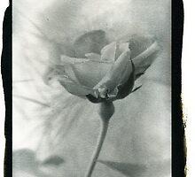 Salt Spring Island Rose by toby snelgrove  IPA