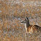 Deerflage by Rodney55