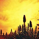 Redscale Silhouette by joolzy