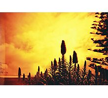 Redscale Silhouette Photographic Print
