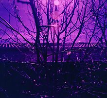 Purple Twigs by joolzy