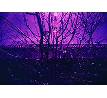 Purple Twigs Photographic Print