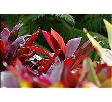 Firey Foliage Photographic Print