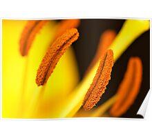 Sunburnt Orange Poster