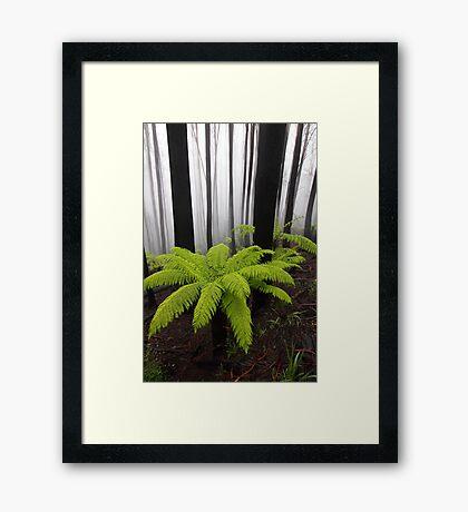 Fog,n Fern. Dicksonia Antarctica. Framed Print