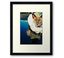 Cool Modine Framed Print