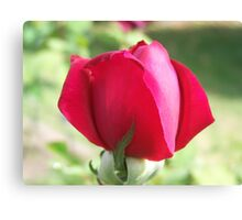 Ruby Delight Canvas Print