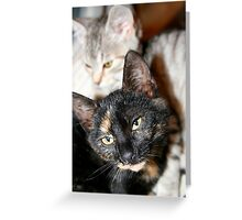 Our kittens Greeting Card