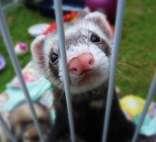 "Ferret ""Love Me!"" by bigbizarre"