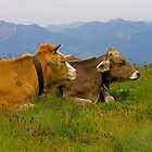 happy cows by mamba