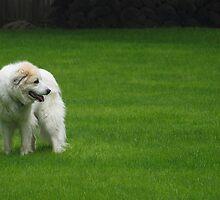 Prairie Dog by Allegra Jacobs