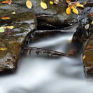 New York's Watkins Glen XII by PJS15204