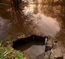 'Ol Stumpy by Andrew Leighton