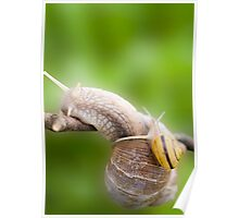 Two snails Poster
