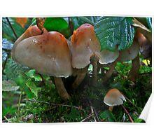 Mushrooms Poster