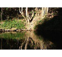 nature - light and dark Photographic Print