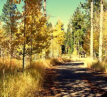 """Mountain Road"" by Lynn Bawden"