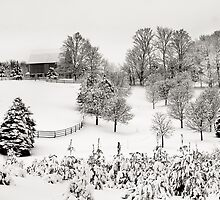 Winter Wonderland by Steve Silverman