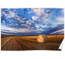 Montana Wheat Field  Poster