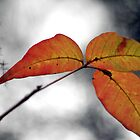 End of Fall by PhotosByLeila