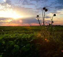 Thistle Sunset by Patrick O'Neill