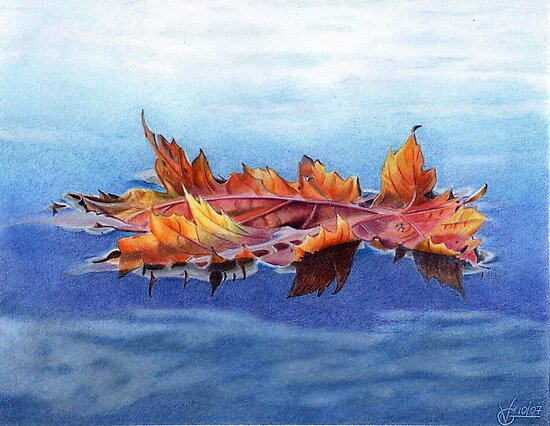 Maple Leaf  by Valentina Gatewood