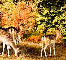 Red deer, Knole Park, Sevenoaks, Kent, UK by Sally Murray