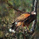 Bird of Prey by Barbara Manis