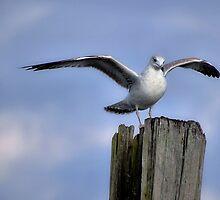 Wind Beneath my Wings by Sandy Woolard