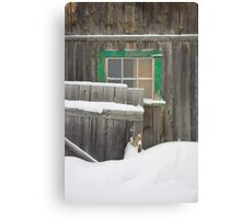 old barn in the snow, Barkerville Canvas Print