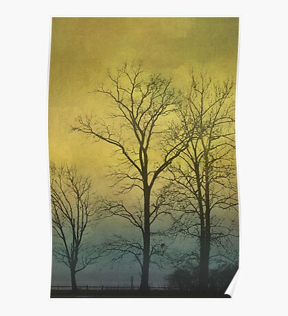 Winter Sky and Tree Silhouette Poster