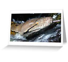 Python Waterfall Greeting Card
