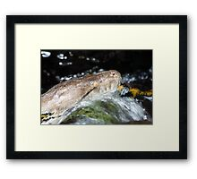 Water Python Framed Print