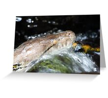 Water Python Greeting Card