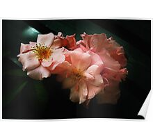 twilight roses Poster