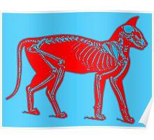3-D Cat Skeleton Poster