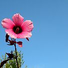 A Single Pink Flower by Rosalie Scanlon